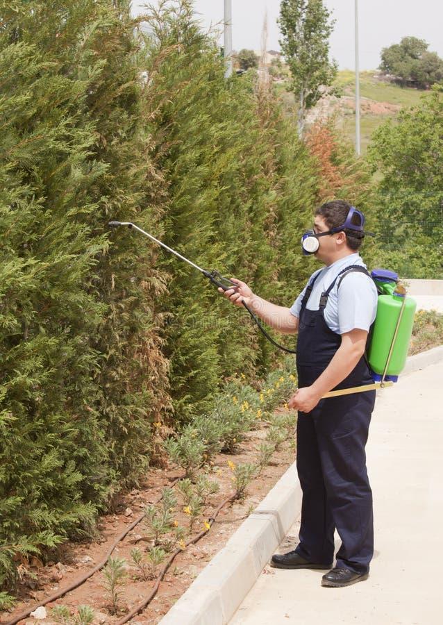 kontrolni insekty obsługują zarazy opryskiwanie zdjęcia stock