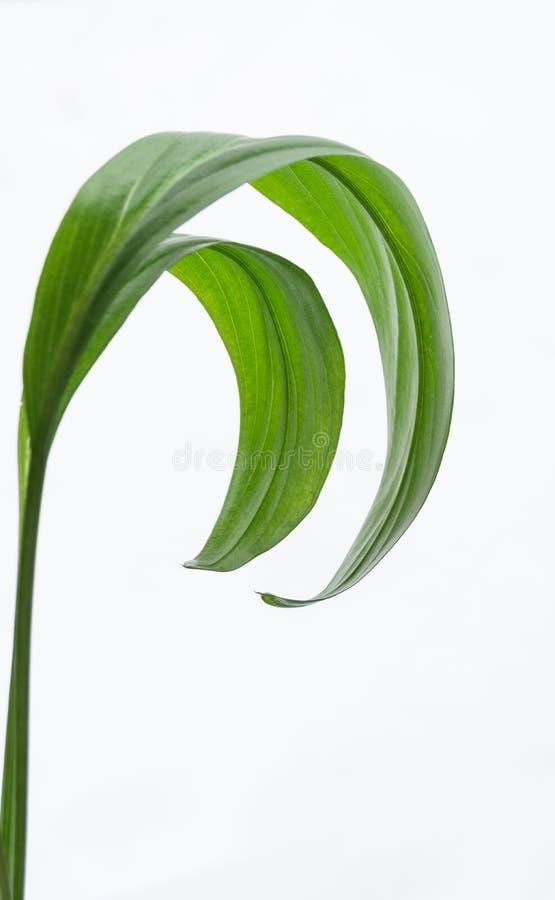 Kontrpara z liśćmi obrazy stock