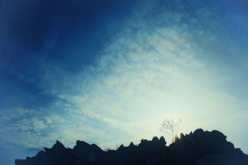 Kontur av bergkanten med det kala trädet - konstnärlig bild med att glöda blekna filtret royaltyfri foto