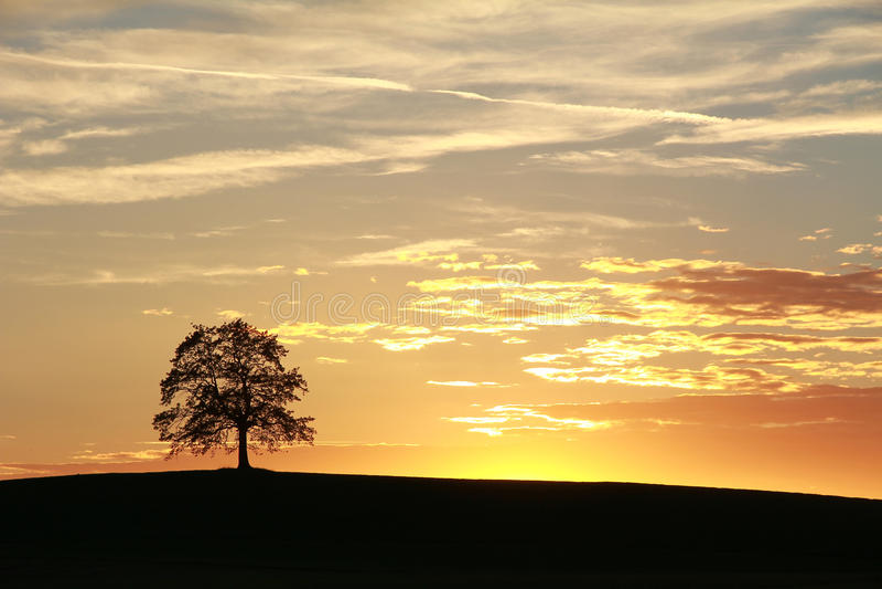 Kontur av den ensamma eken, härligt solnedgånglandskap royaltyfria foton