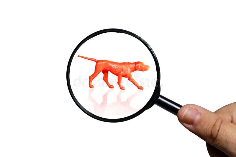 Kontur av den ryska hundhunden p? vit bakgrund arkivfoto