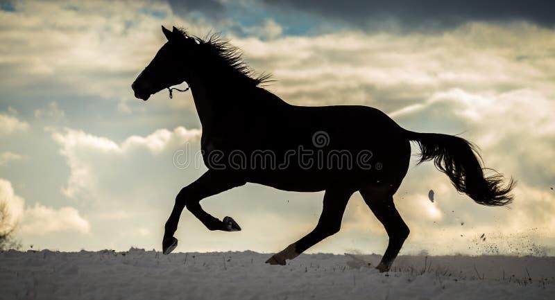 Kontur av den stora hästen som kör i snön med dramatisk molnig himmel royaltyfria foton