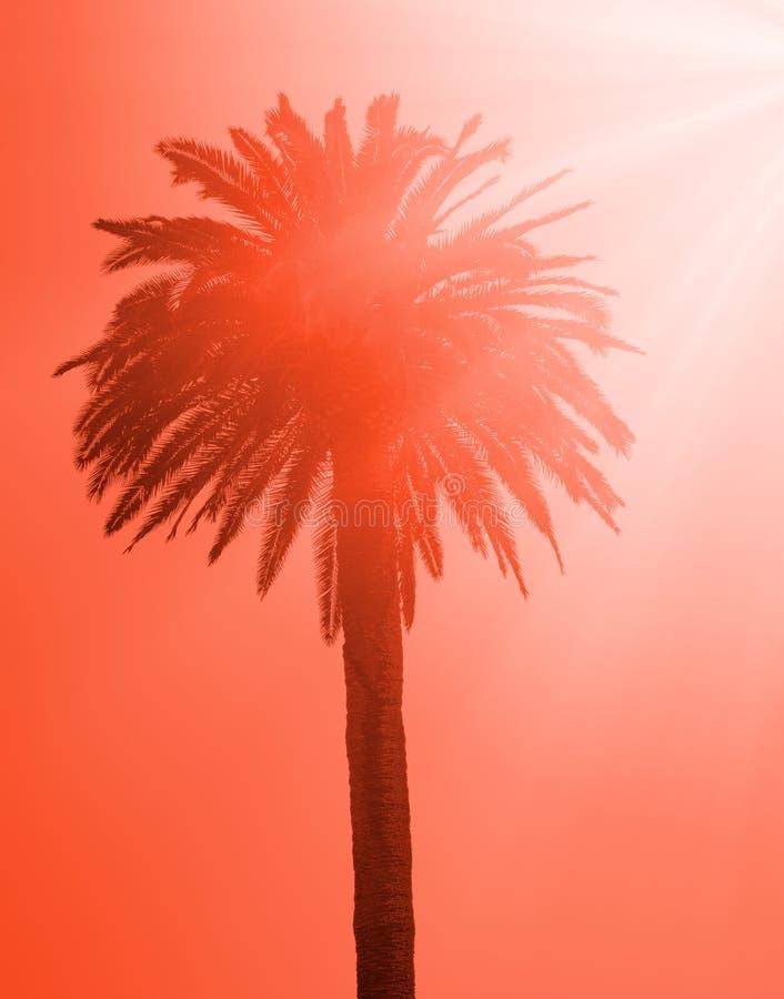 Kontur av den tropiska palmträdet arkivfoto