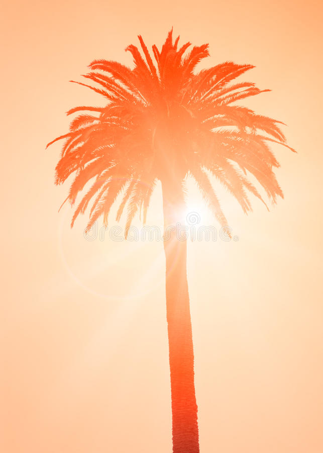 Kontur av den tropiska palmträdet arkivbild