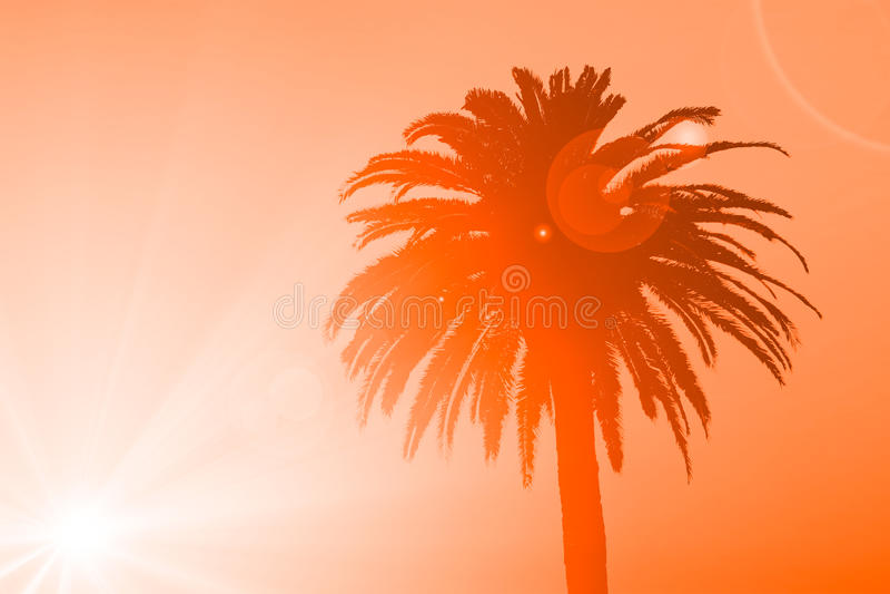 Kontur av den tropiska palmträdet arkivfoton