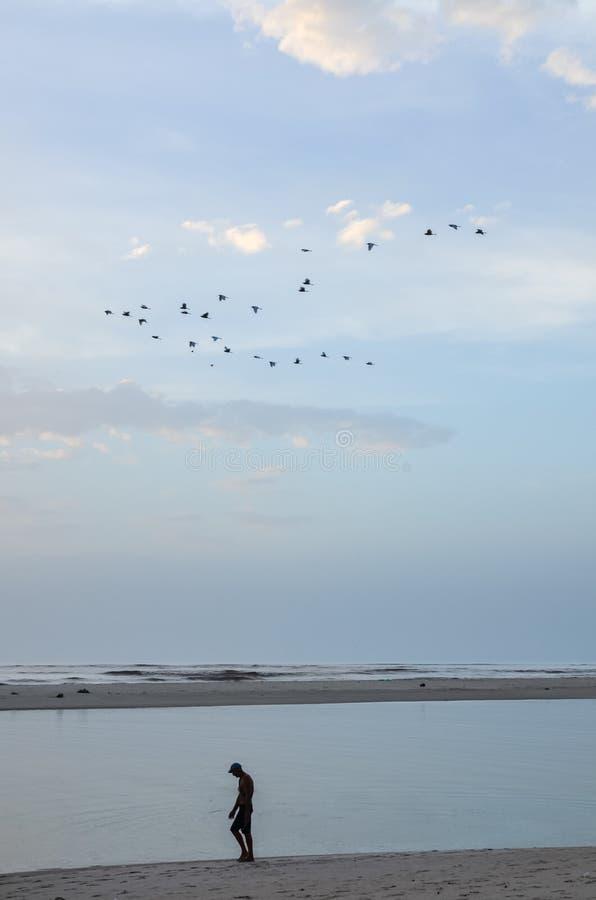Kontur av den unidentifieable mannen som promenerar stranden under gryning med lugna hav- och flygfåglar royaltyfria foton