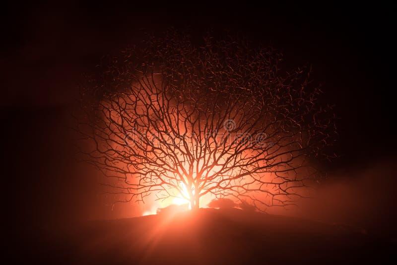 Kontur av det läskiga allhelgonaaftonträdet med fasaframsidan på mörk dimmig tonad brand Läskigt begrepp för fasaträdallhelgonaaf arkivbilder