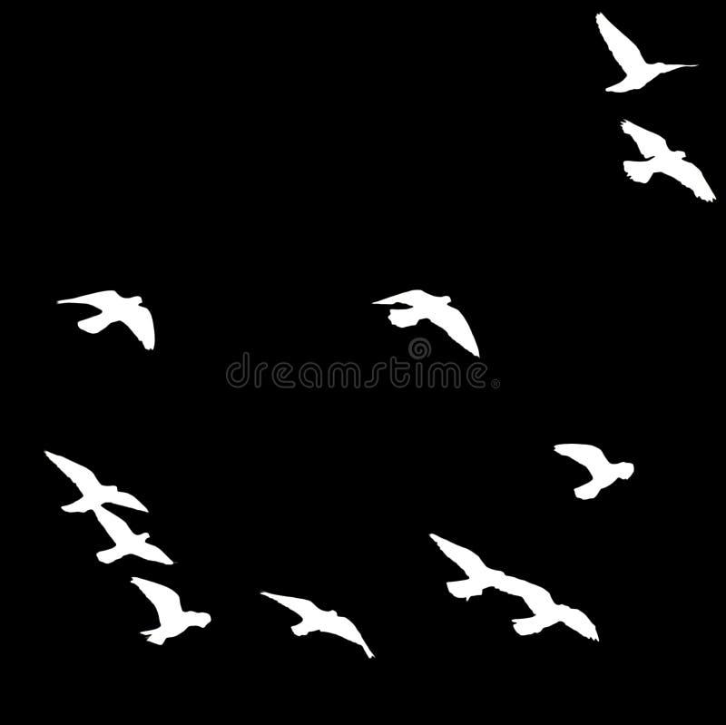Kontur av en flock av fåglar på en svart bakgrund arkivfoton