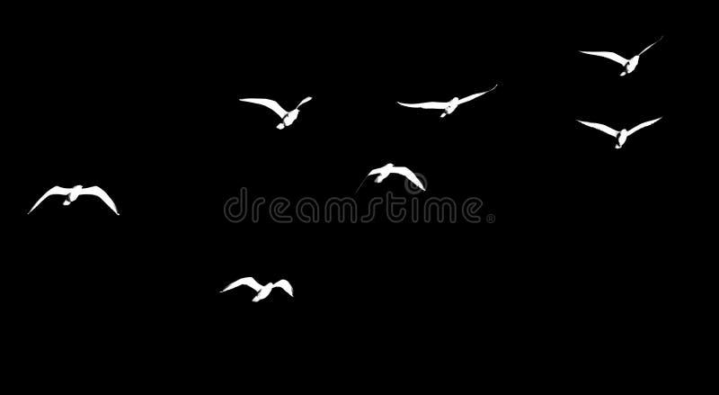 Kontur av en flock av fåglar på en svart bakgrund arkivbild