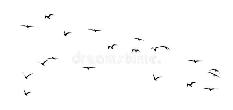 Kontur av en flock av fåglar på en vit bakgrund royaltyfria bilder