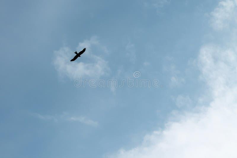 Kontur av en flyg?rn fotografering för bildbyråer