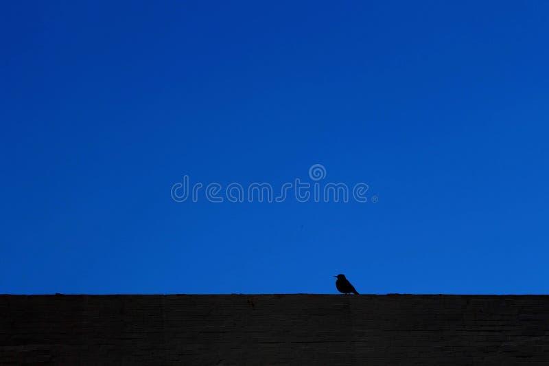 Kontur av en liten fågel royaltyfria foton