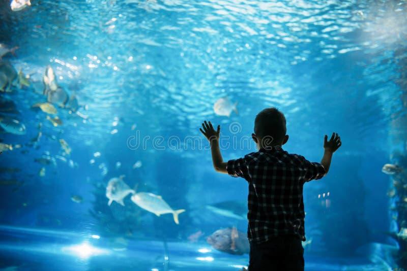 Kontur av en pojke som ser fisken i akvariet royaltyfri foto