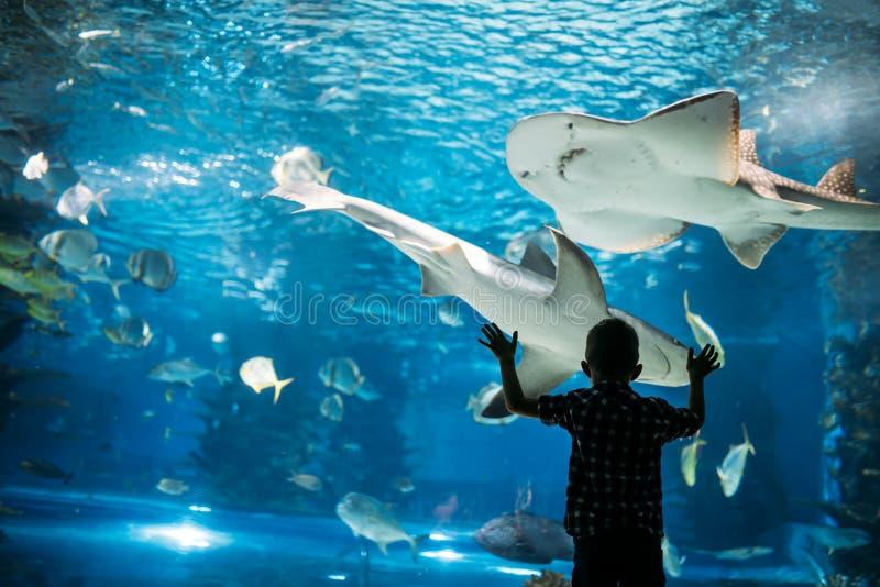 Kontur av en pojke som ser fisken i akvariet royaltyfri fotografi