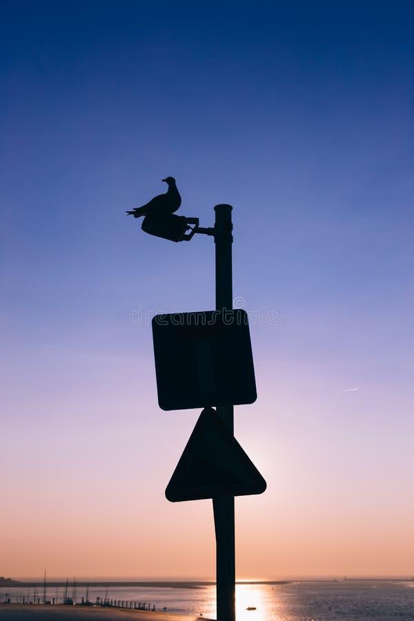 Kontur av en seagull som överst vilar av en lampstolpe fotografering för bildbyråer