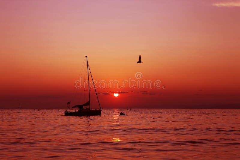 Kontur av en segelbåt mellan soluppgången under en röd himmel med flygseagulls arkivbild