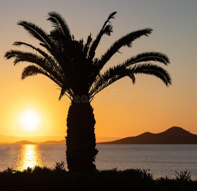 Kontur av en stor palmträd framme av en spektakulär solnedgång i havet med berg i bakgrunden och de orange färgerna royaltyfri fotografi