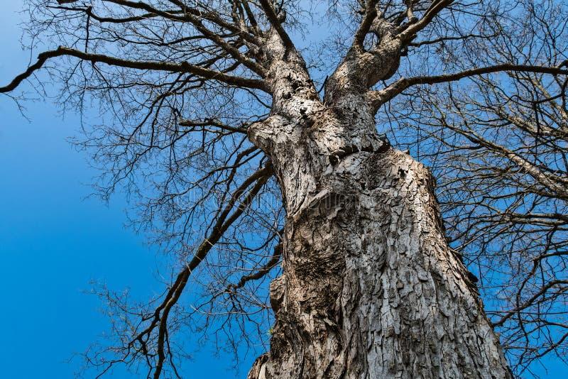 Kontur av en trädkrona med blå himmel fotografering för bildbyråer