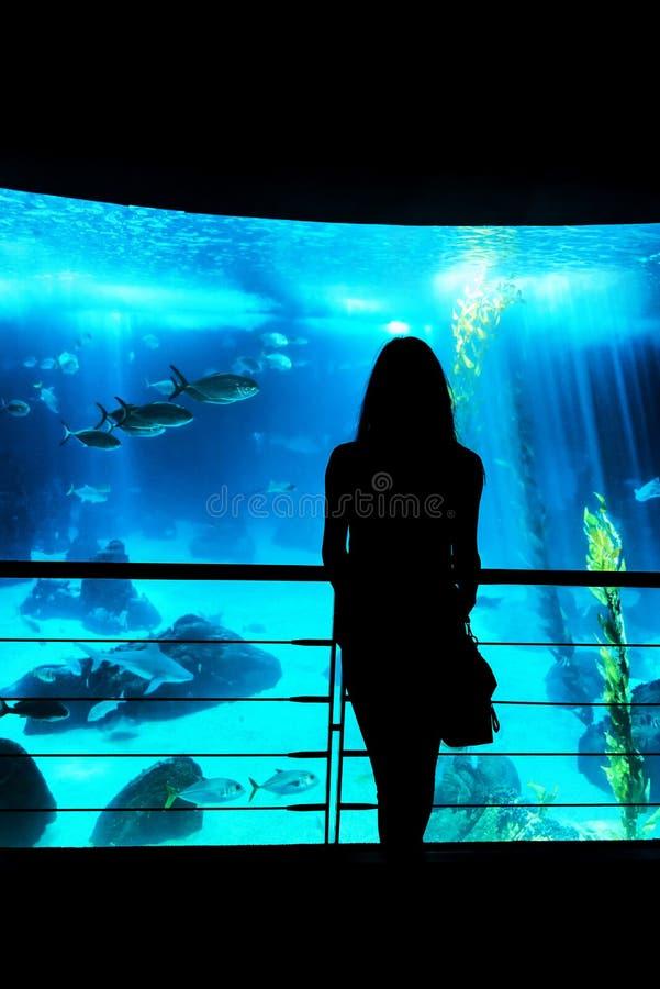 Kontur av en ung dam som ser fiskbehållaren på det aquar arkivbild