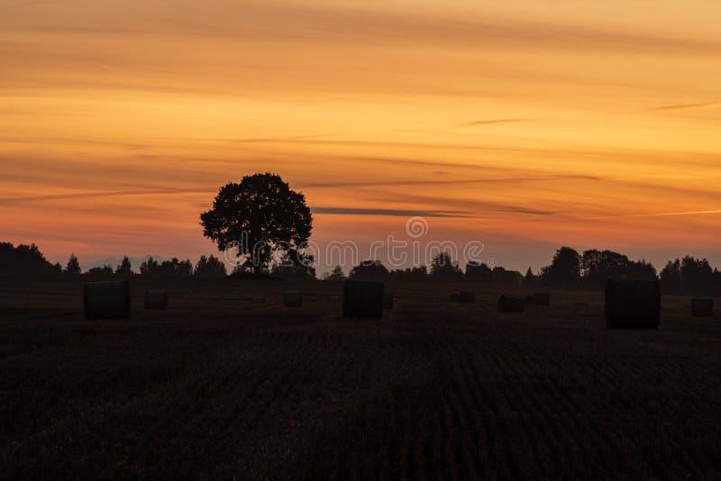 Kontur av ensamma träd- och hörullar under soluppgång royaltyfria foton