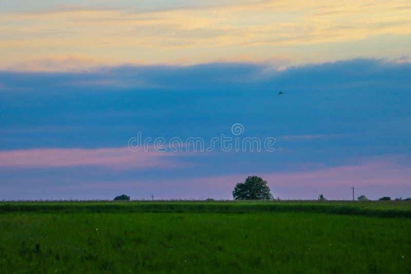 Kontur av ett ensamt träd på ett öppet fält fotografering för bildbyråer