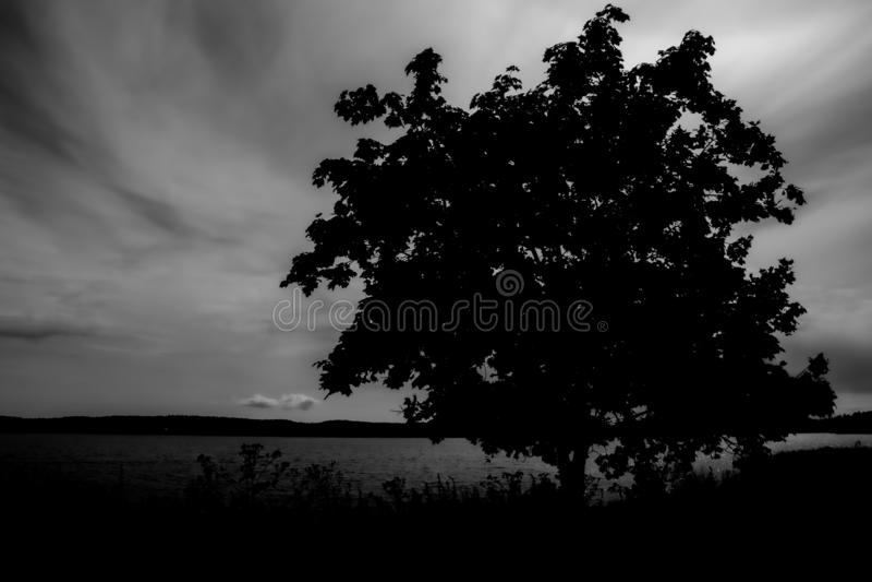 Kontur av ett ensamt träd på sjön i molnigt väder arkivbild