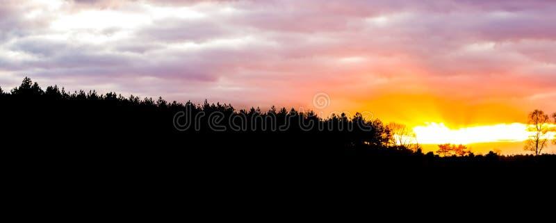 Kontur av ett ljunglandskap i skogen på solnedgången, solnedgång som ger ett färgrikt glöd i himlen och molnen royaltyfria foton