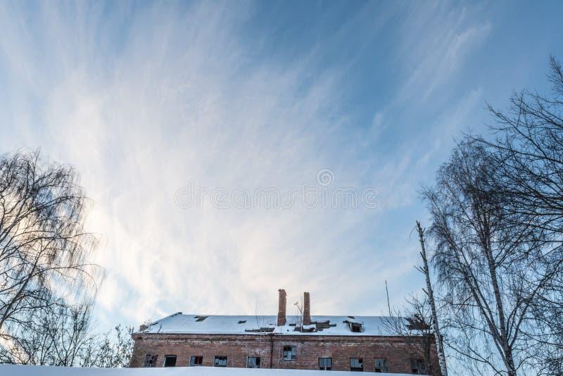 Kontur av ett träd utan sidor på en bakgrund av blå himmel arkivbilder