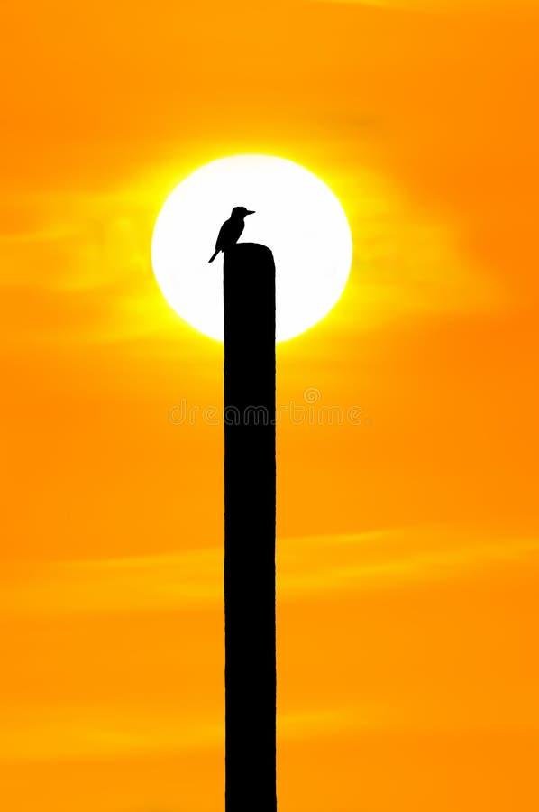 Kontur av fågeln på trä arkivfoton