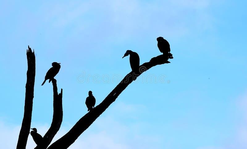 Kontur av fåglar som sitter på filialer av trädet mot bakgrund för blå himmel vektor illustrationer