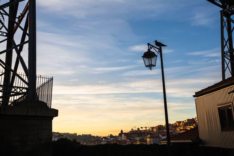 Kontur av gatalampan och fågeln i Porto royaltyfria foton