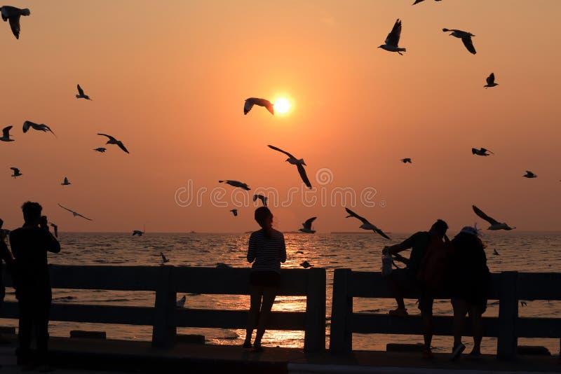 Kontur av hållande ögonen på seagulls för peple under solnedgång arkivfoton