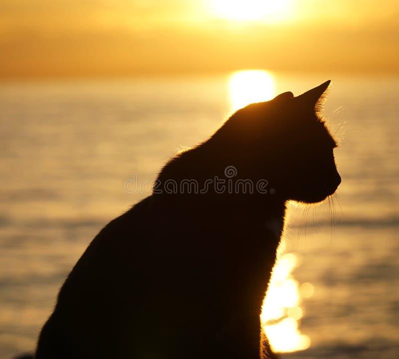 Kontur av katten royaltyfri fotografi