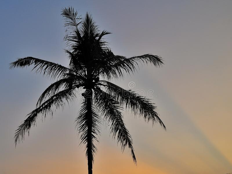 Kontur av kokosnötpalmträd som isoleras på färgrik himmelbakgrund royaltyfri fotografi