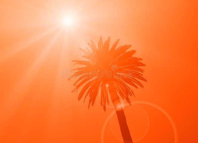 Kontur av kronan av den tropiska palmträdet royaltyfri bild