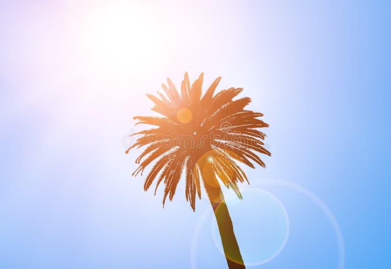 Kontur av kronan av den tropiska palmträdet royaltyfri foto