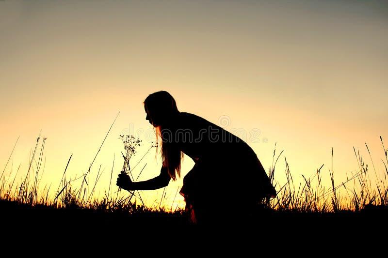 Kontur av kvinnaplockningvildblommor i äng på solnedgången royaltyfria foton