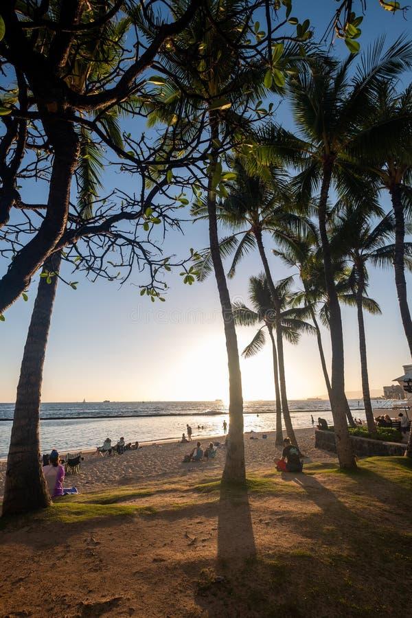 Kontur av palmtr?d p? den Waikiki stranden royaltyfri bild