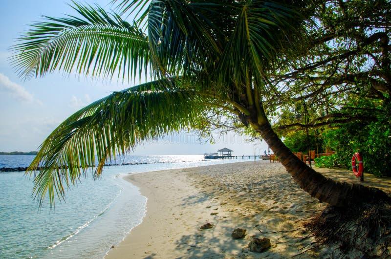 Kontur av palmträdet på bakgrund av det tropiska strandlandskapet för härlig vit sand r arkivfoto