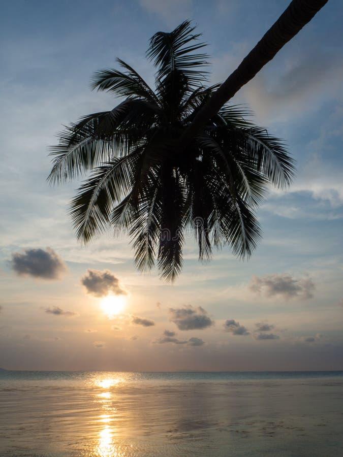 Kontur av palmtr?d p? solnedg?ngen och m?ngf?rgade moln arkivbild