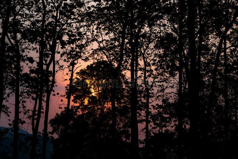 Kontur av träd i skogen med orange solljus som igenom skiner i morgonen mot rosa himmel royaltyfria bilder
