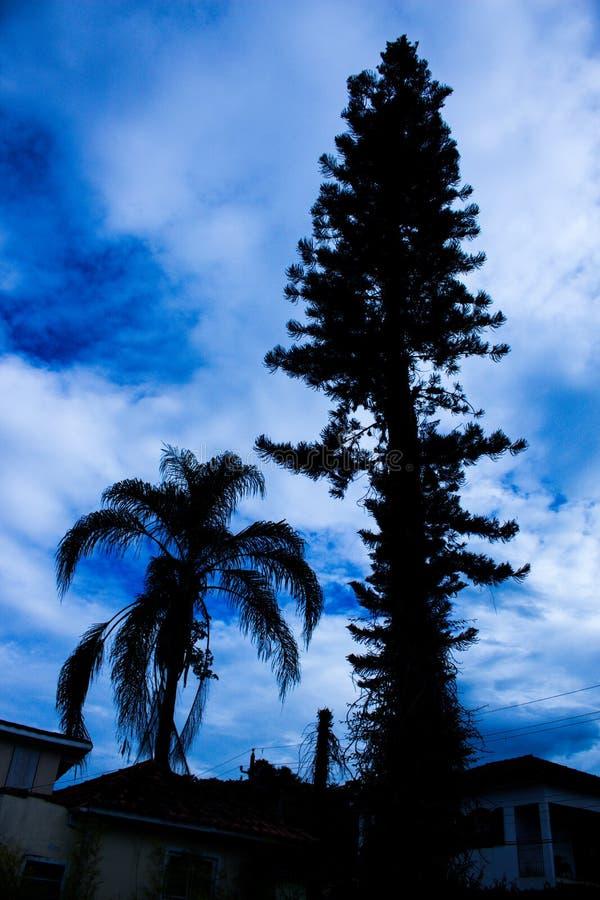 Kontur av träd mot en bedöva blå himmel arkivfoto