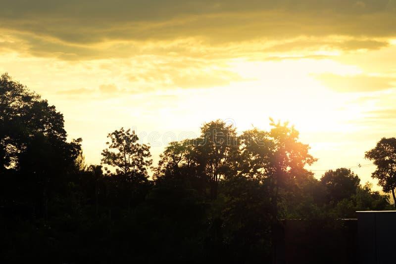 Kontur av träd och himmel med moln royaltyfri foto