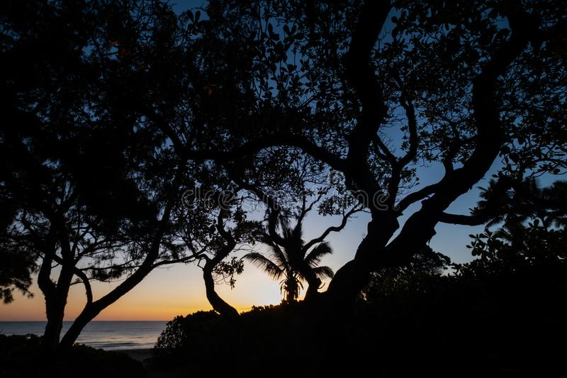 Kontur av tr?d p? den Hawaii stranden royaltyfria foton