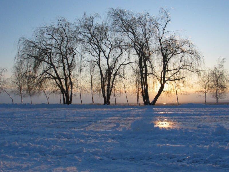 Kontur av träd på solnedgången royaltyfri foto