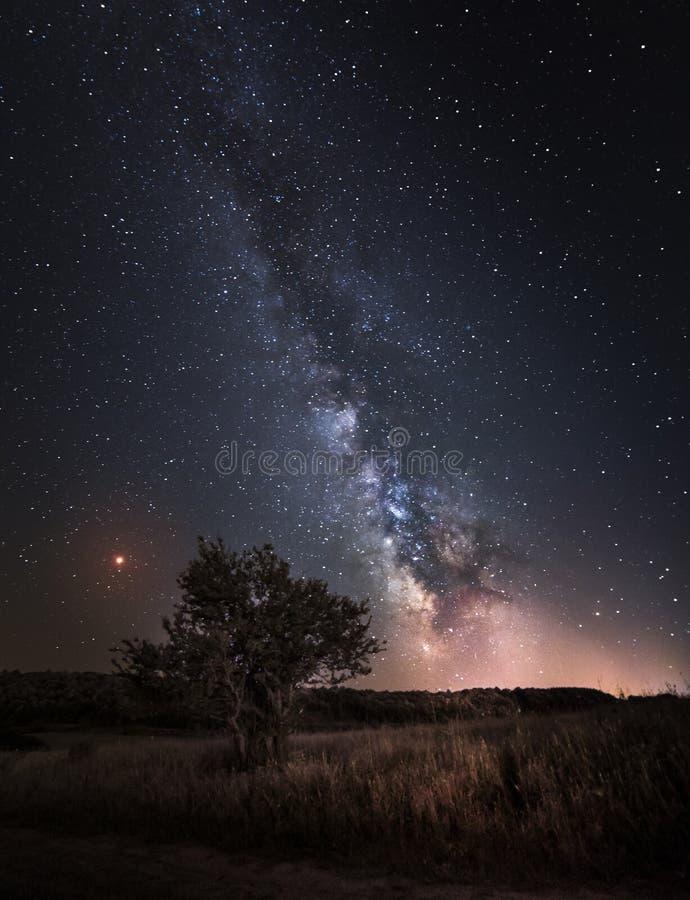 Kontur av trädet med naturligt landskap och Vintergatangalaxen royaltyfri fotografi