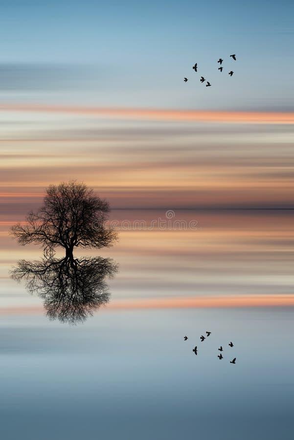 Kontur av trädet på lugna havvattenlandskap på solnedgången royaltyfri foto