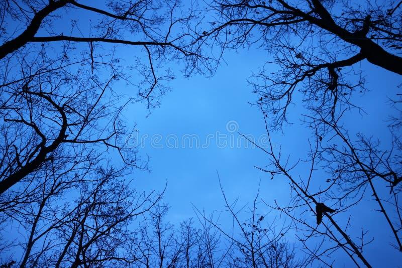 Kontur av trädfilialer under blå himmel fotografering för bildbyråer