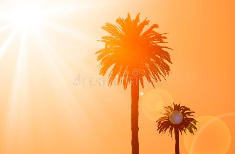 Kontur av två palmträd arkivfoton