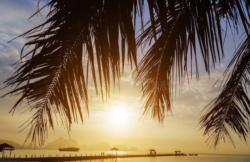 kontur för palmträd för solnedgång för aftonhimmelmoln Vietnam b?sta destinationer, l?ng fj?rd f?r mummel royaltyfri bild